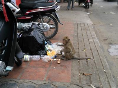 singes gourmands de Phnom Penh