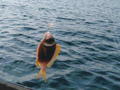 15 mars : matinée de pêche sur ile de Cu Lao Cham