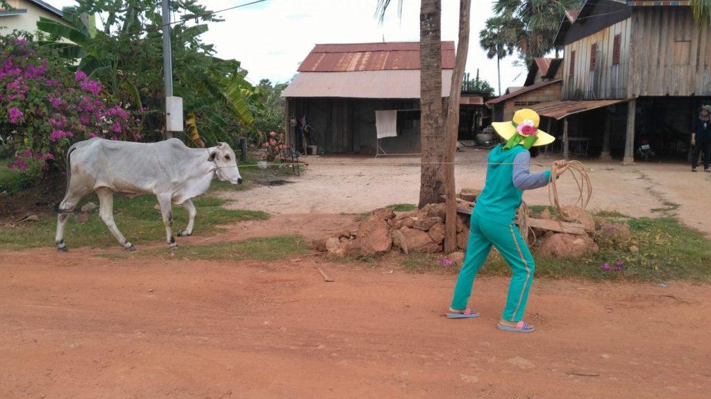 En route vers Kep beach nous croisons une vache et sa fermière