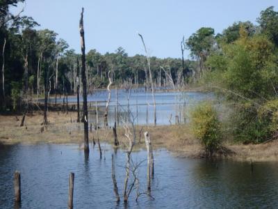 où des arbres de toutes les tailles poussent dans une eau souvent trouble