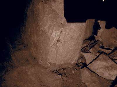 Arignée dans la Cave