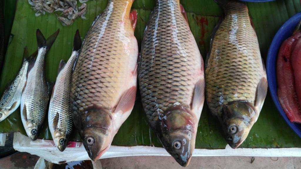 Marché de Luang Nantha : poissons frais