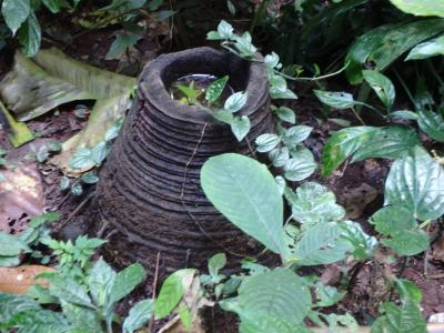 Verre en bambou