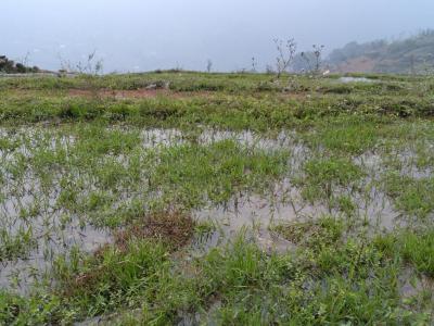 Vue sur les rizières de Sapa